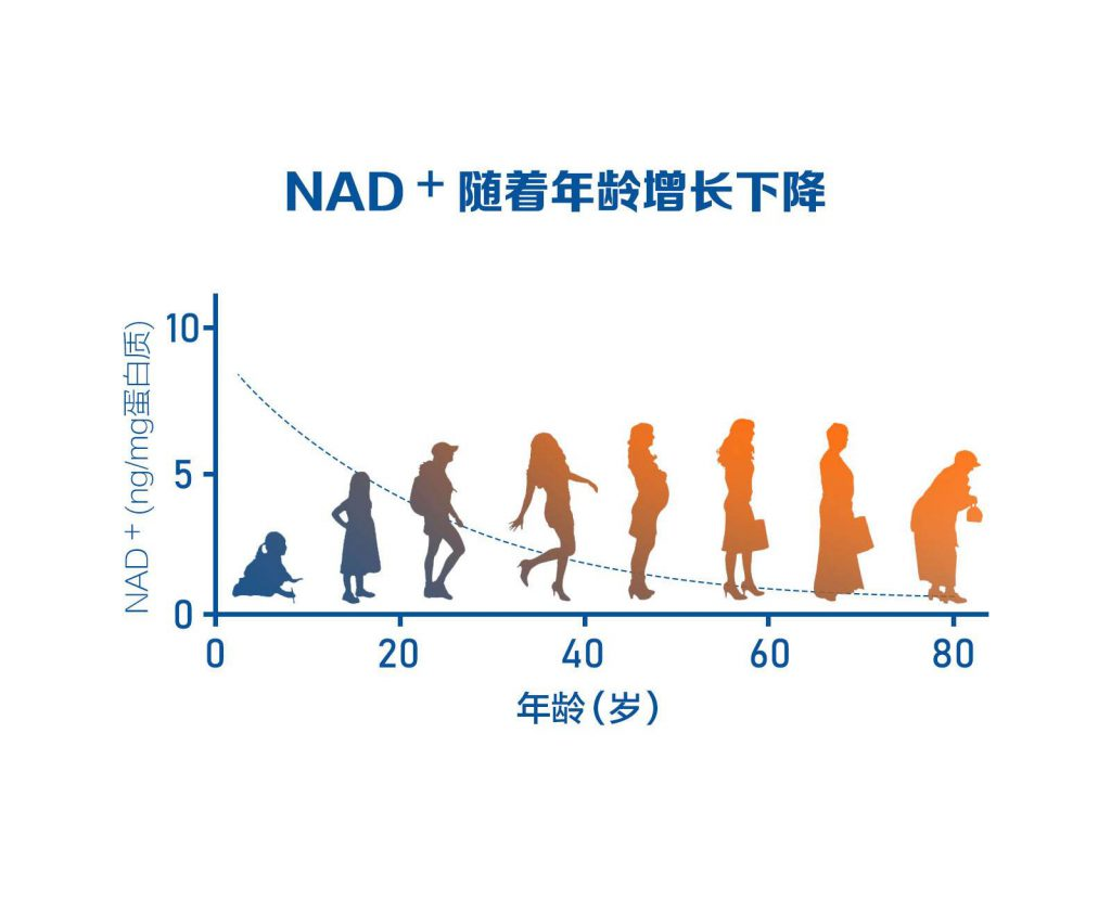 NMN和NMN+的升级版本之间的区别你了解多少?插图