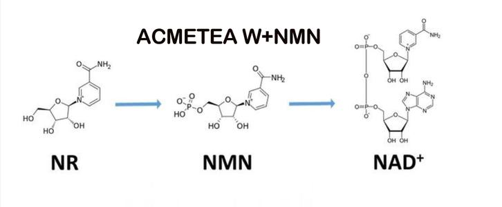 NMN的功效与作用是真的吗插图(1)