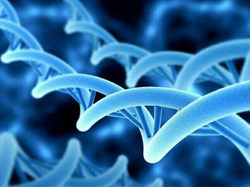 NMN抗衰老如何?