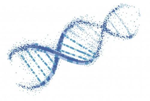NMN主要成分及食用功效